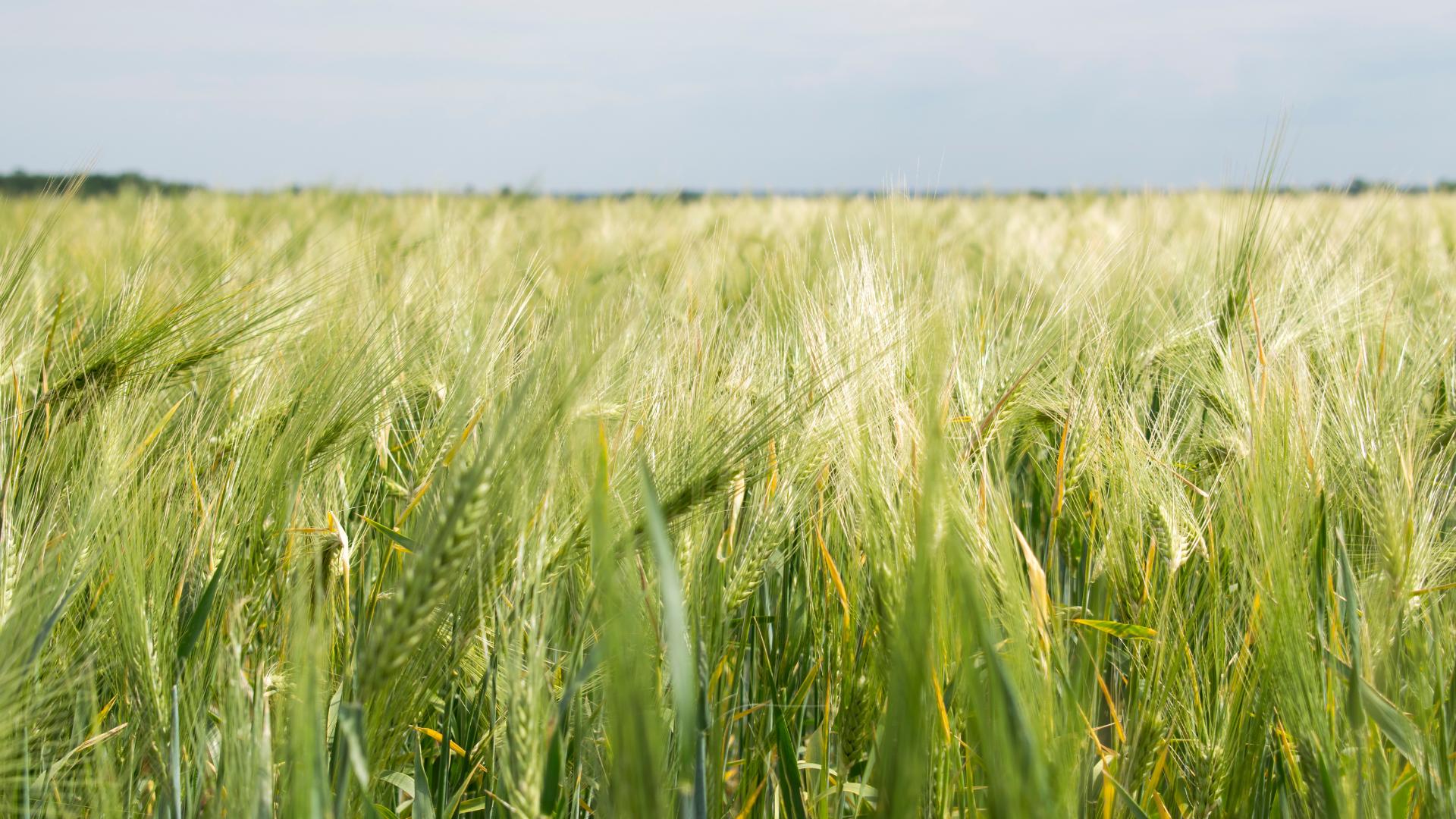 Agroalimentare e sostenibilità alimentare